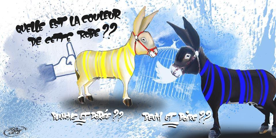 La couleur de la robe... les ânes sur internet !