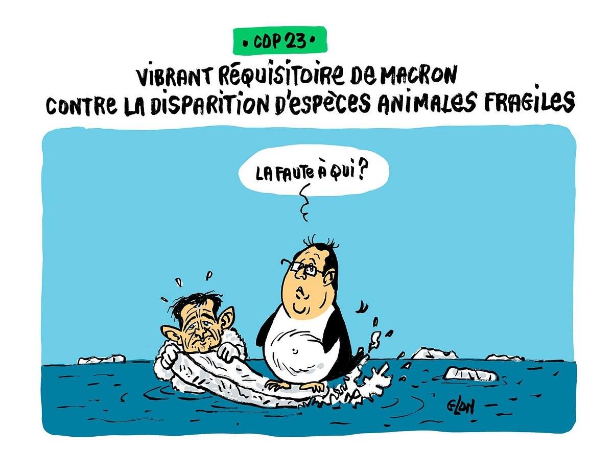 dessin humoristique de françois Hollande en pingouin menacé de disparition, et Benoît Hamon en ours blanc