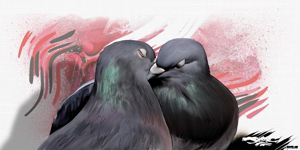 dessin drôle de deux pigeons qui s'embrassent pour la Saint-Valentin