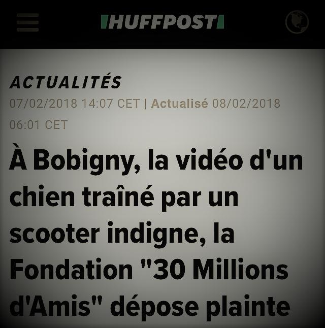 copie d'écran d'actualité parlant du chien traîné par un scooter à Bobigny
