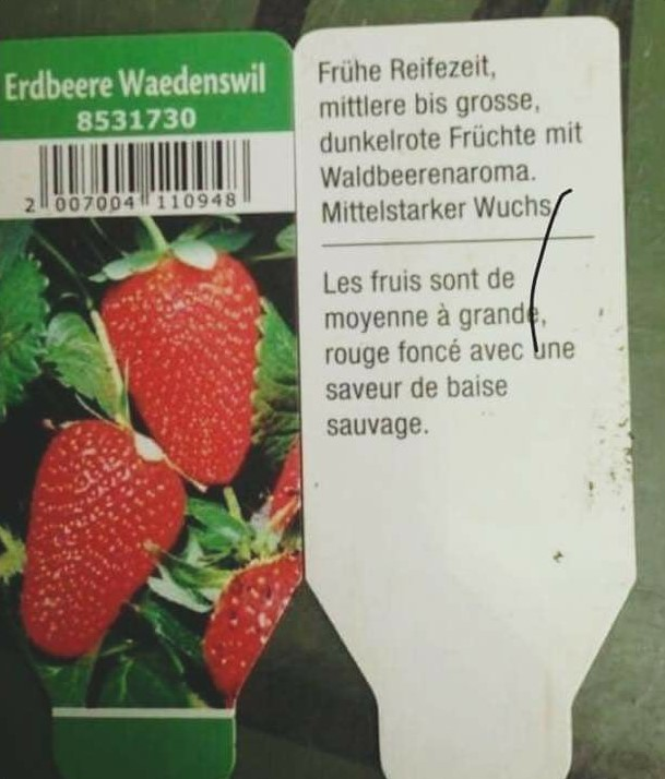 photo de la notice d'utilisation d'un plant de fraises ayant une saveur de baise sauvage