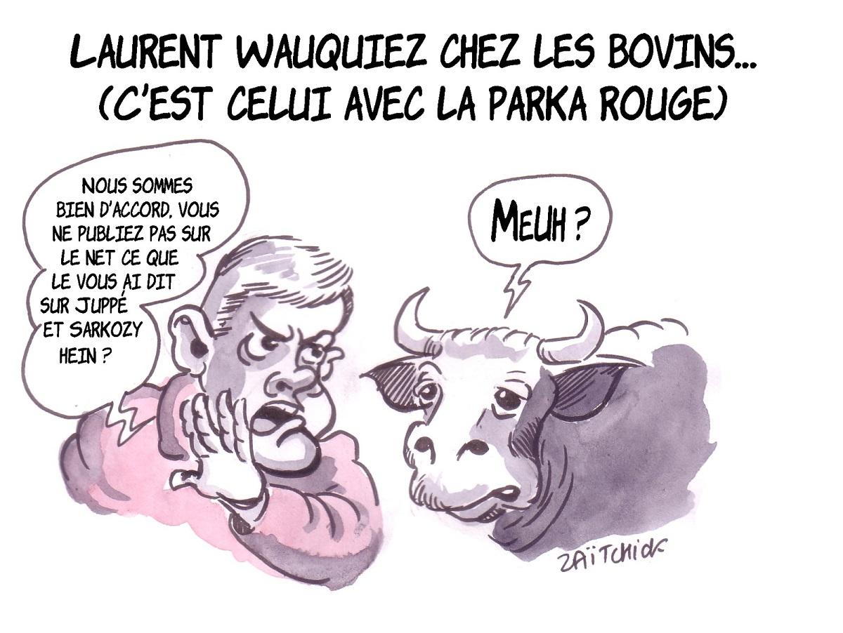 dessin humoristique de Laurent Wauquiez parlant à une vache au Salon de l'agriculture