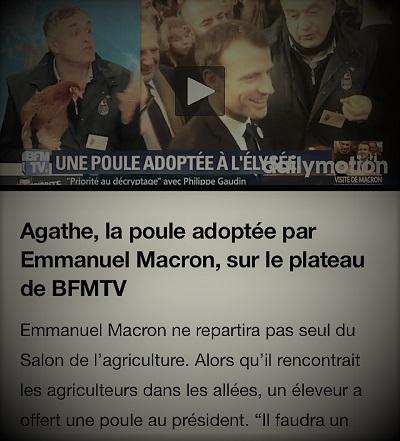 copie d'écran d'actualités parlant de la poule de l'Élysée, Agathe, invitée sur le plateau de BFMTV