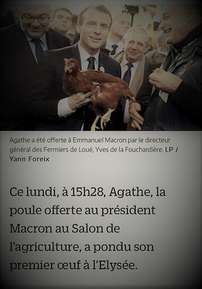 copie d'écran d'actualité présentant Emmanuel Macron et sa poule Agathe qui vient de pondre un oeuf