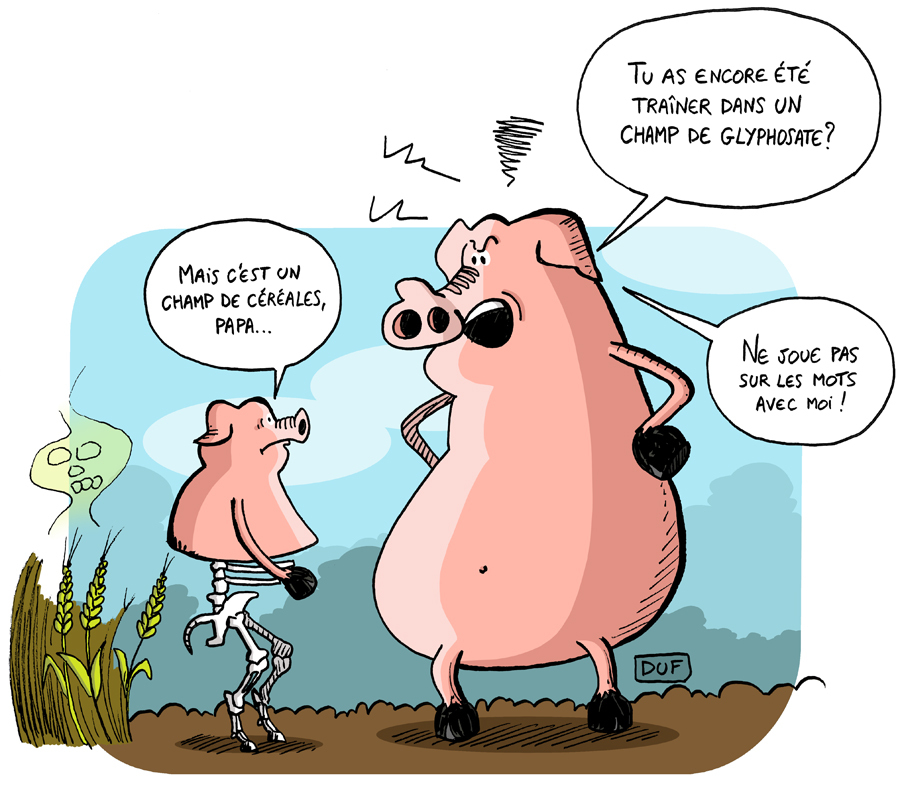 dessin d'actualité humoristique montrant des cochons dans un champ traité au glyphosate