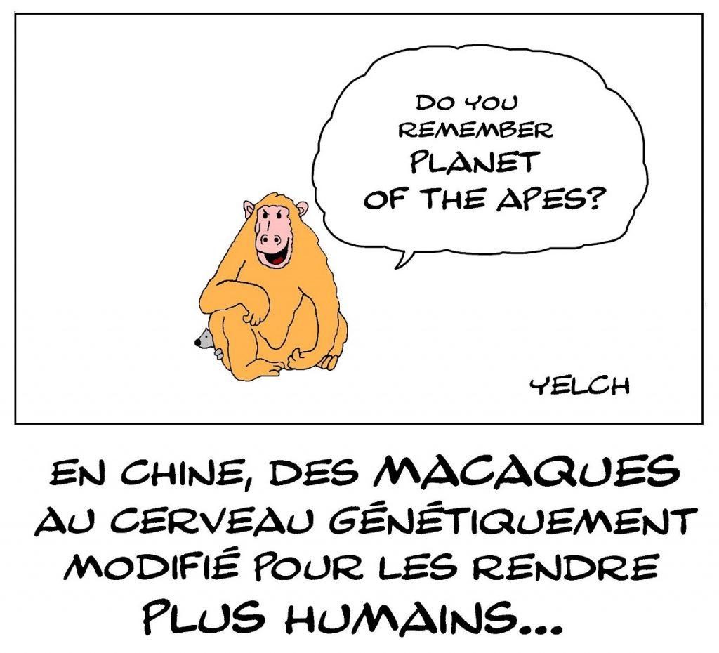 dessin de Yelch sur les expériences chinoises d'amélioration du cerveau des macaques par la génétique