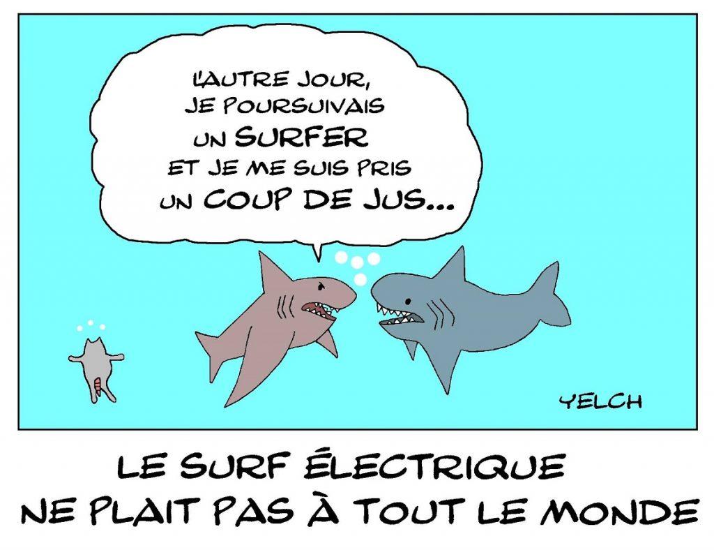 dessin de Yelch sur le surf électrique et les requins
