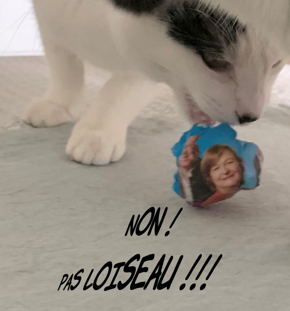 image drôle de Virus le chat jouant avec une boulette de Loiseau