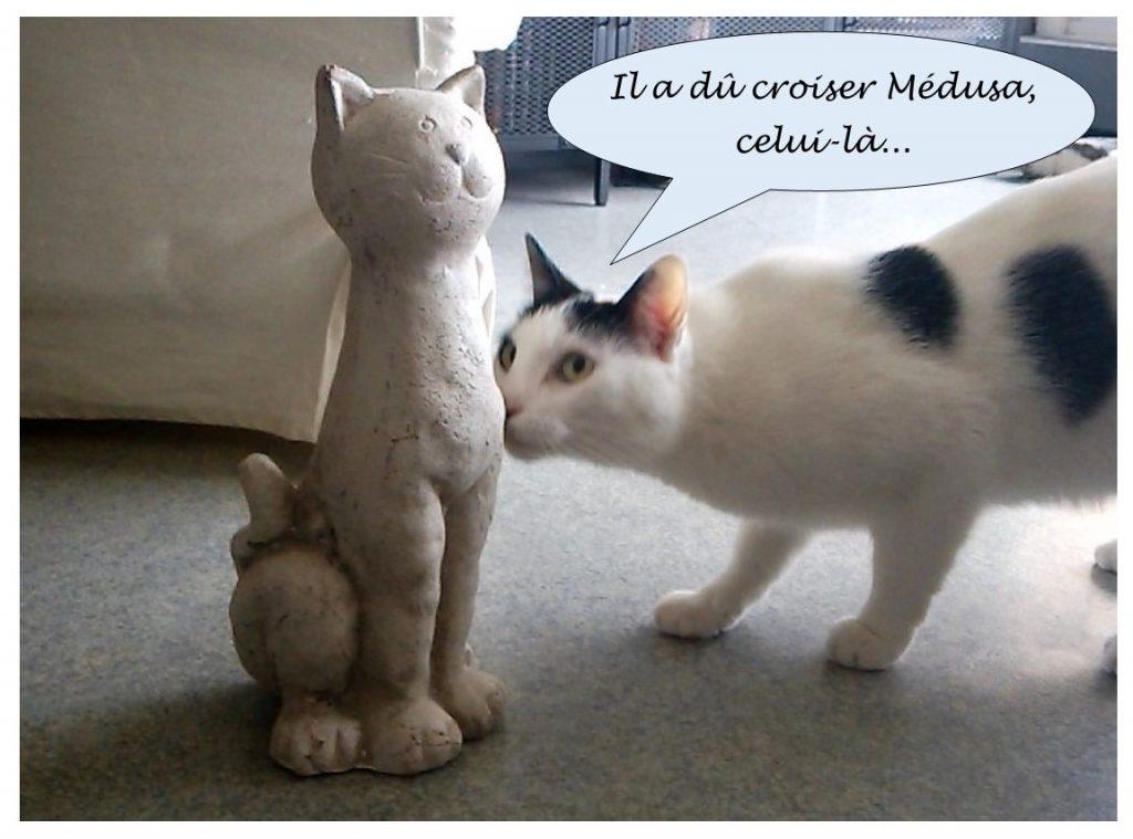 image drôle de Virus le chat croisant une statue de chat