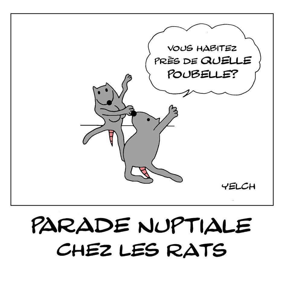 dessin de Yelch sur la parade nuptiale chez les rats