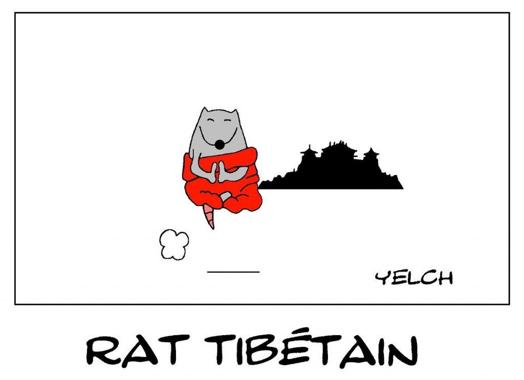 dessin de Yelch sur le Tibet et les rats moines tibétains