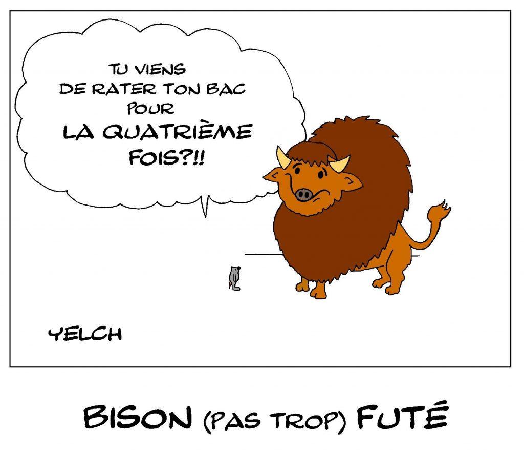 dessin de Yelch sur les bisons pas trop futés