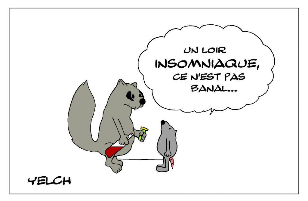 dessin de Yelch sur les loirs et l'expression dormir comme un loir