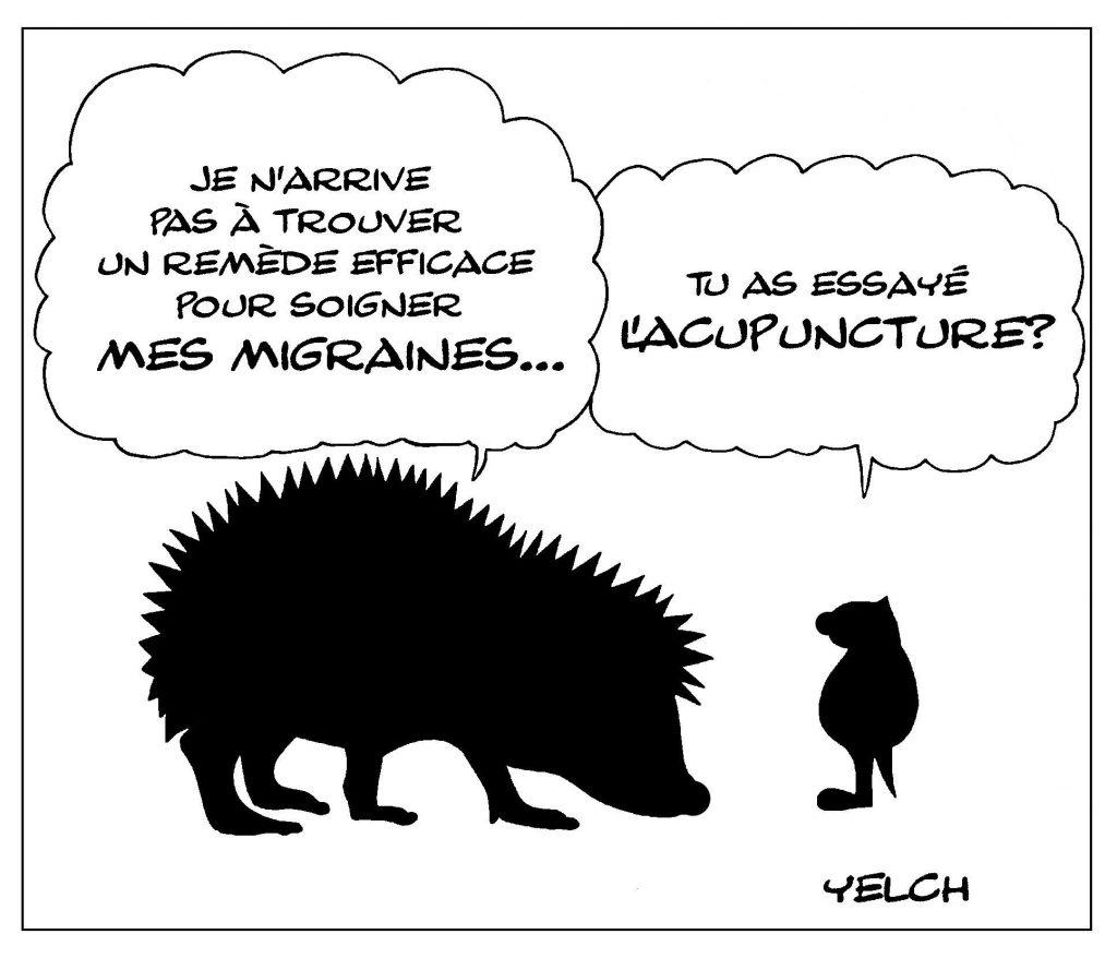 dessin de Yelch sur les hérissons et l'acupuncture