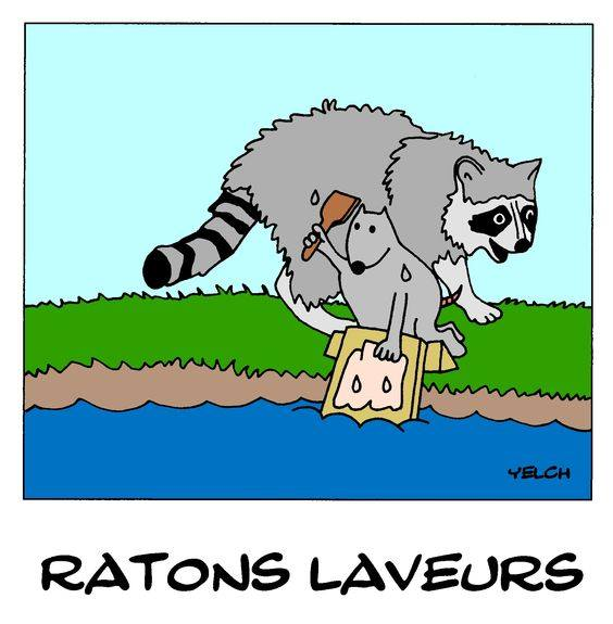 dessin de Yelch sur les ratons laveurs
