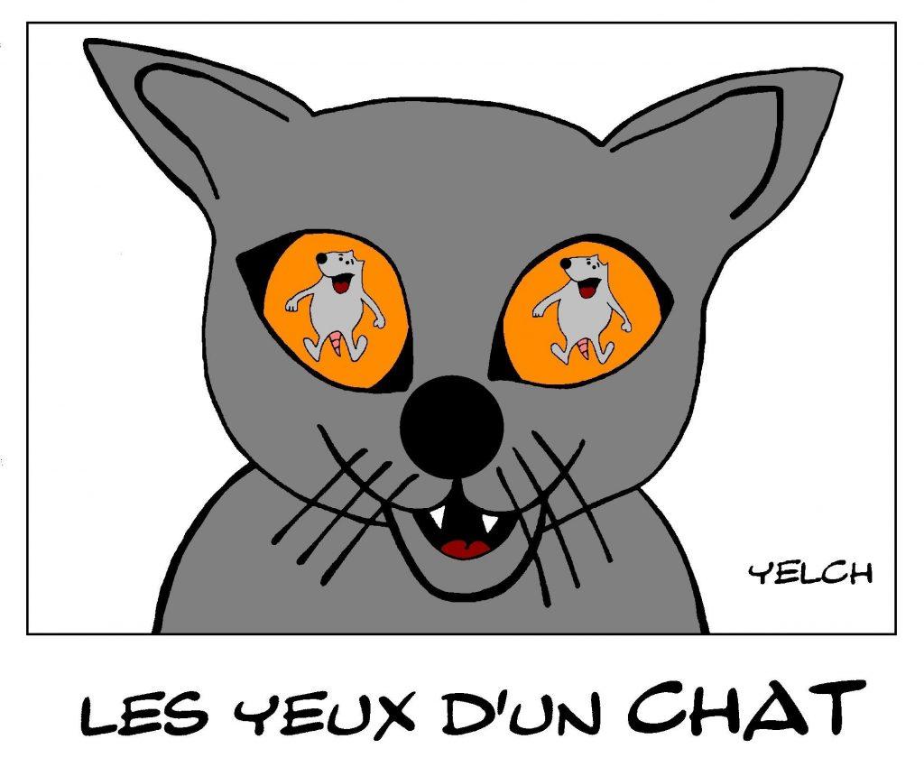 dessin de Yelch sur les yeux d'un chat