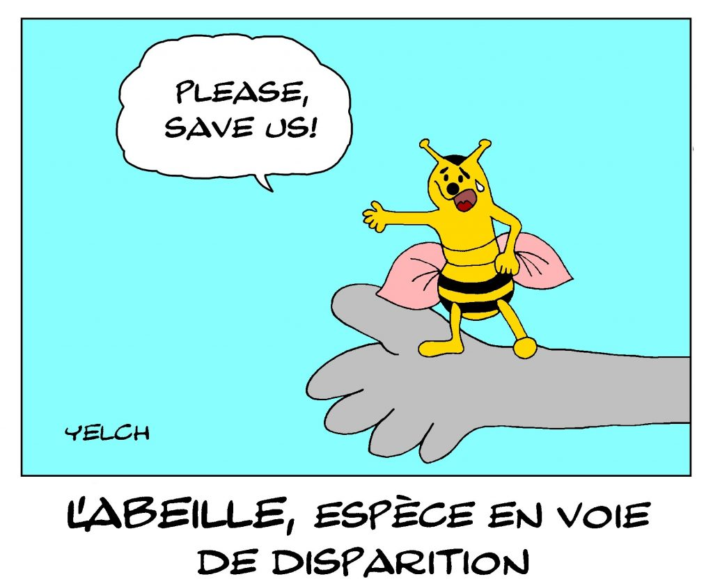 dessin de Yelch sur la disparition des abeilles