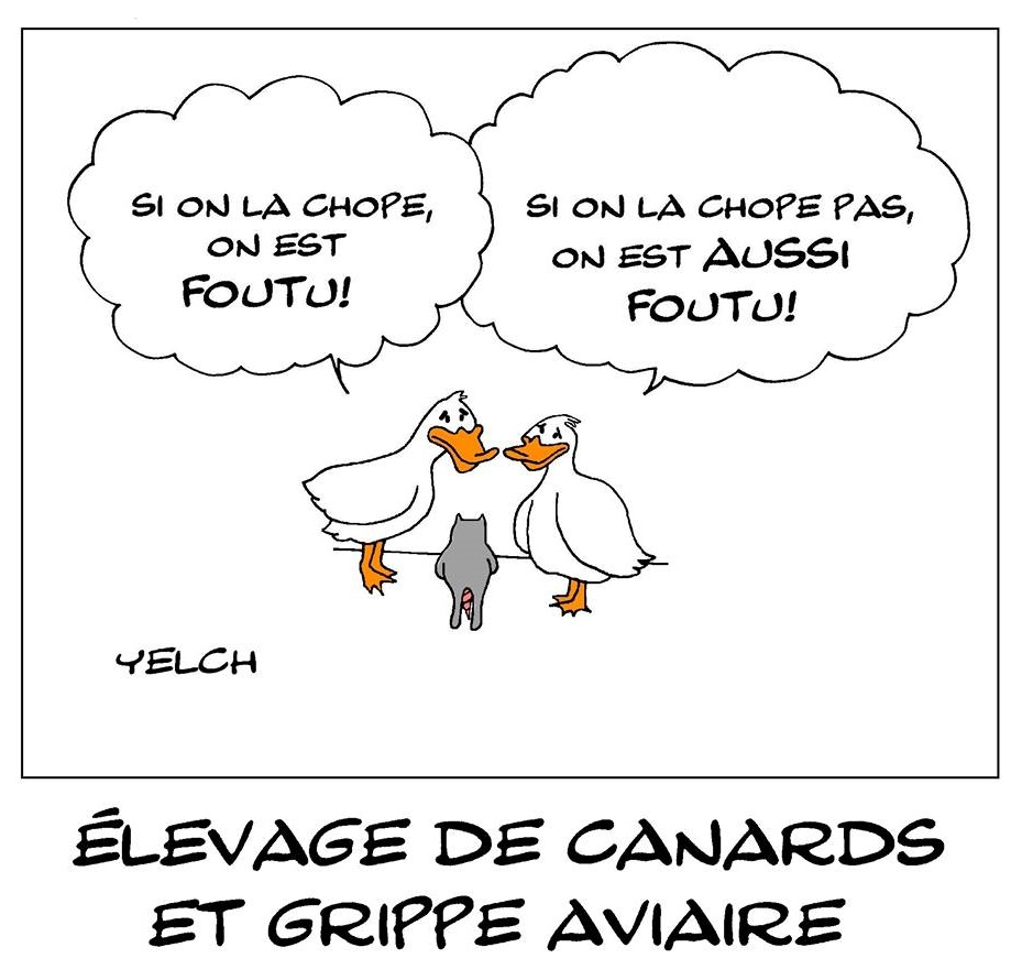 dessin de Yelch sur les élevages de canards et la grippe aviaire
