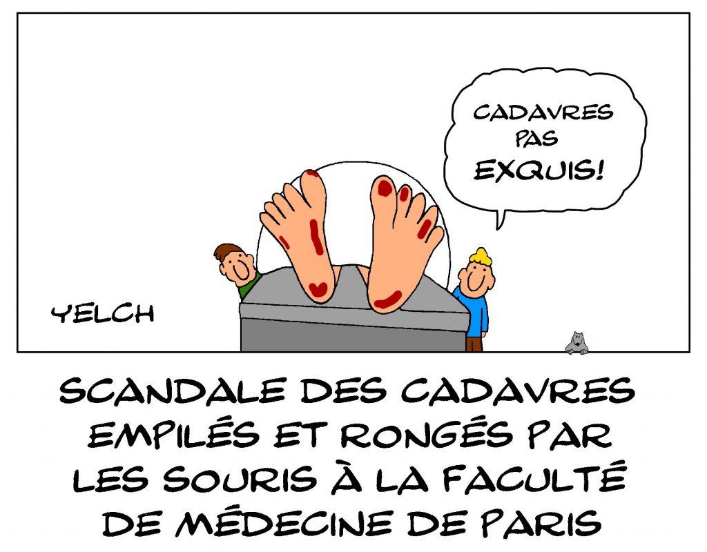 dessin de Yelch sur le scandale des cadavres de la faculté de médecine de Paris