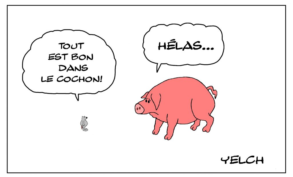 dessin de Yelch sur l'utilisation du cochon dans l'alimentation humaine