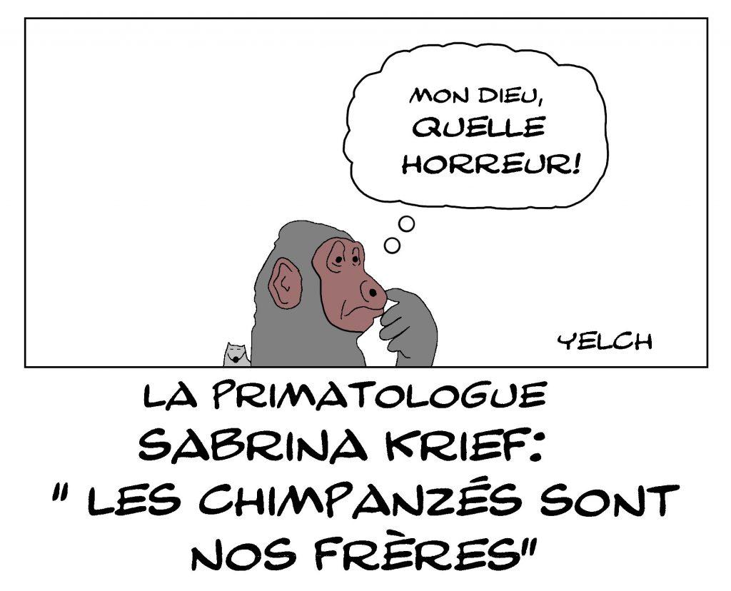 dessin de Yelch sur la fraternité entre humains et chimpanzés d'après la primatologue Sabrina Krief