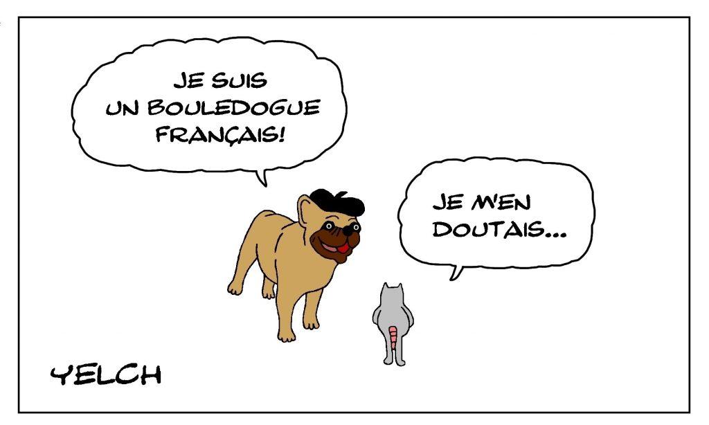 dessin de Yelch sur les bouledogues français