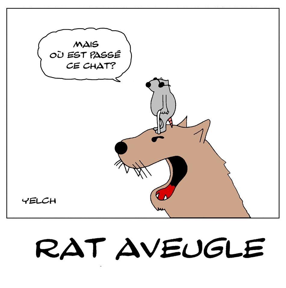 dessin de Yelch sur les rats aveugles et les chats