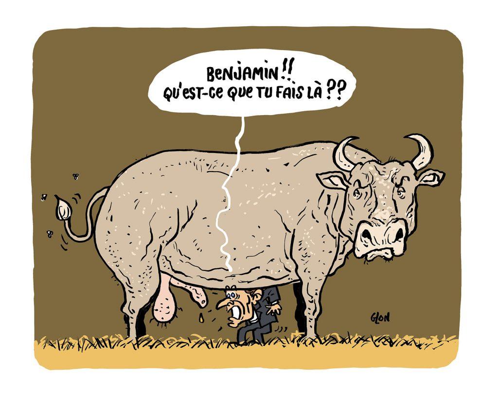 dessin humoristique de Glon sur le salon de l'agriculture de Paris et Emmanuel Macron croyant reconnaître le sexe de Benjamin Griveaux
