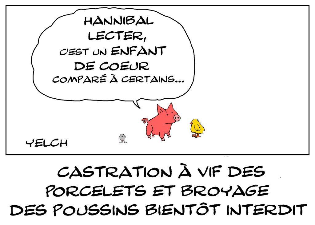 dessin de Yelch sur la prochaine interdiction de la castration à vif des porcelets et du broyage des poussins