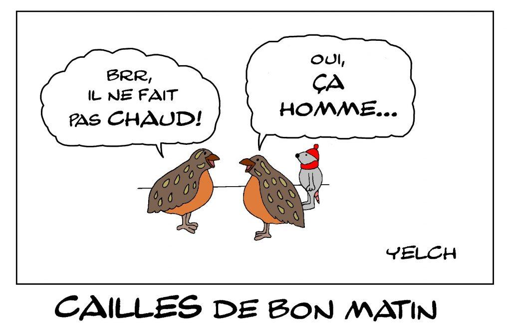 dessin de Yelch sur les cailles et l'expressions française ça caille