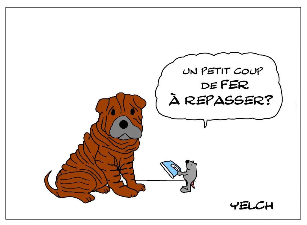 dessin de Yelch sur les chiens de race Shar Pei