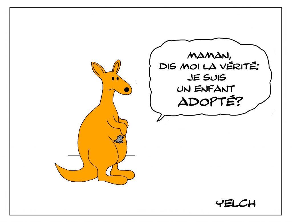 dessin de Yelch sur les kangourous et l'adoption