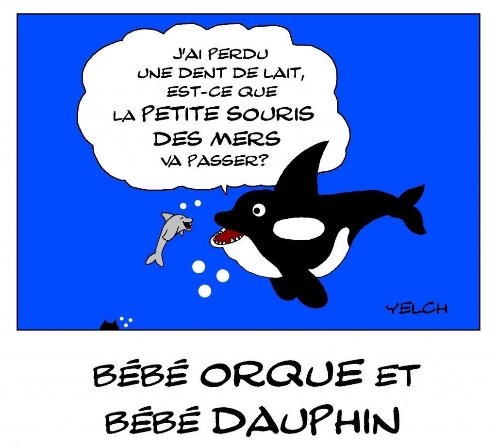 dessin de Yelch sur les orques, les dauphins et la petite souris des mers