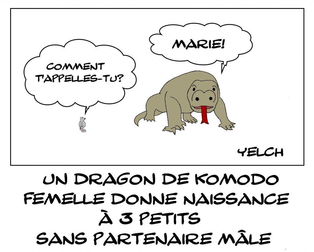 dessin de Yelch sur la parthénogenèse chez les Dragons de Komodo