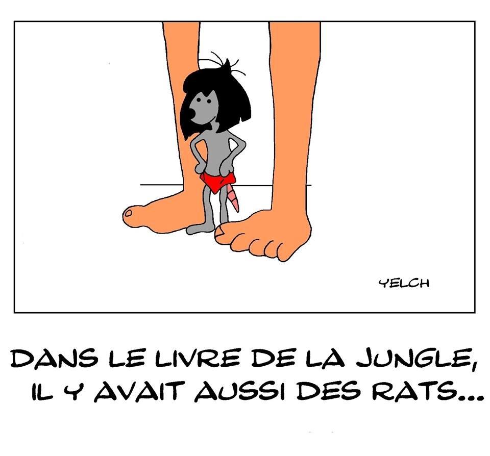 dessin de Yelch sur Livre de la Jungle et les rats de la jungle