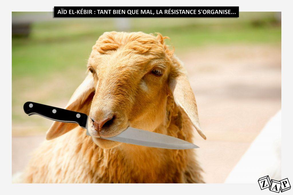 dessin d'actualité de Zap sur le ramadan et la résistance des moutons à l'égorgement rituel