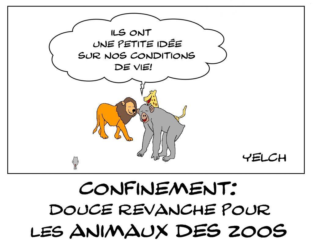 dessin de Yelch sur l'épidémie de covid-19, le confinement et les animaux de zoo