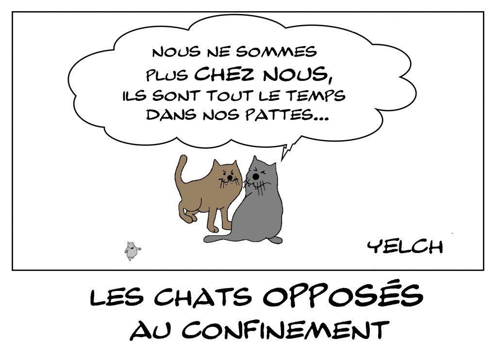 dessin de Yelch sur l'épidémie de Covid-19 et les chats confrontés au confinement