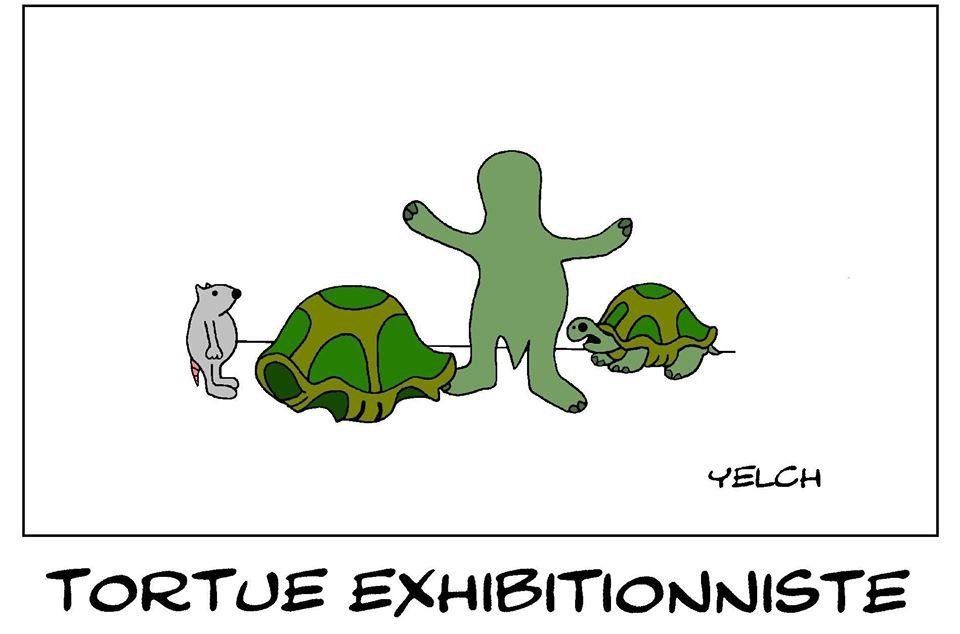 dessin de Yelch sur les tortues et les exhibitionnistes