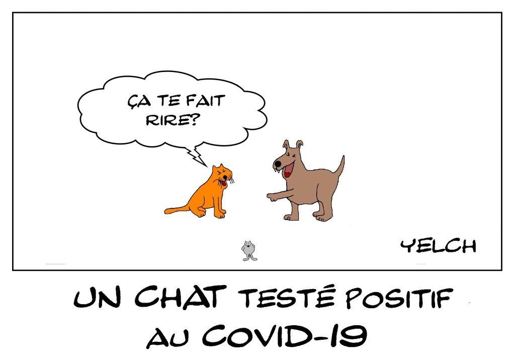 dessin de Yelch sur l'épidémie de coronavirus et la contamination des animaux domestiques