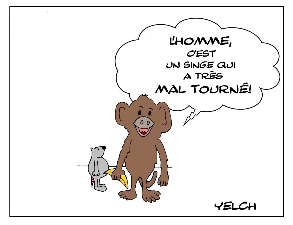 dessin de Yelch sur les singes et l'évolution de l'homme