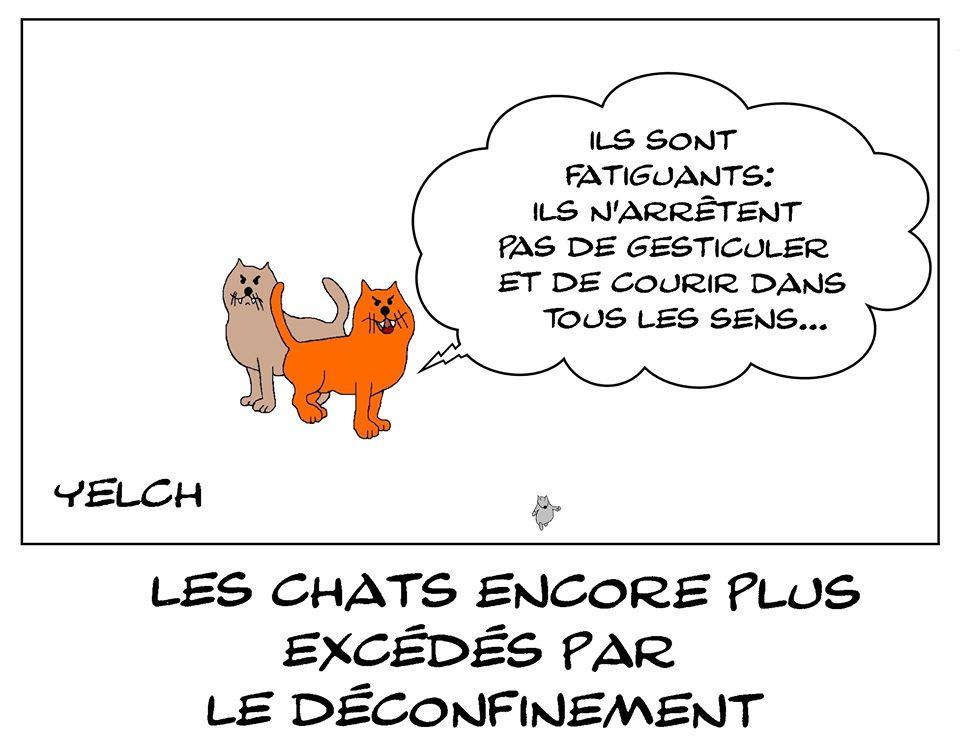 dessin de Yelch sur le déconfinement et les chats