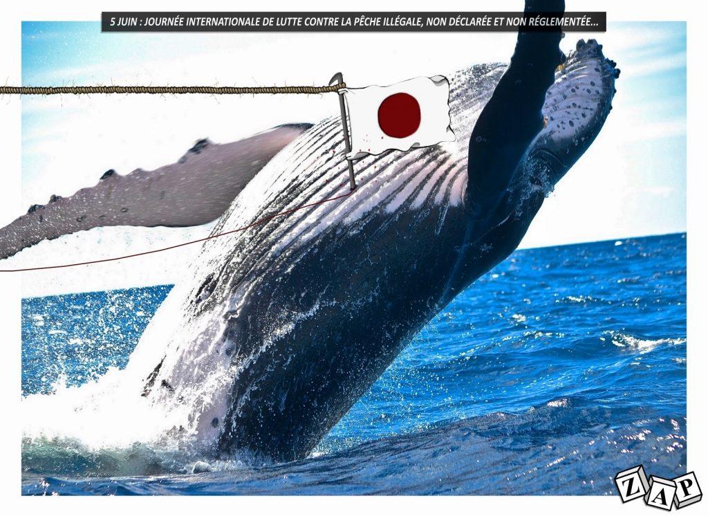 dessin d'actualité de Zap sur la journée internationale contre la pêche illicite