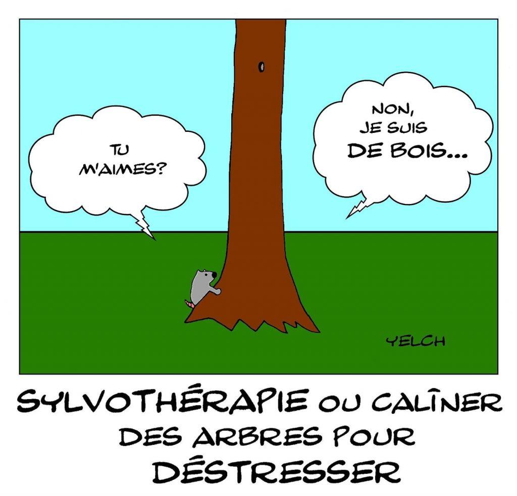 dessin humour sylvothérapie image drôle câlins arbres