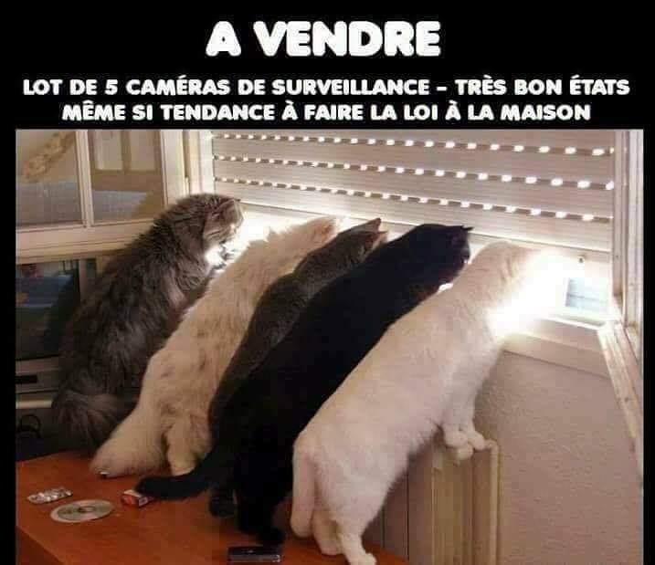 Humour chats image drôle caméras de surveillance