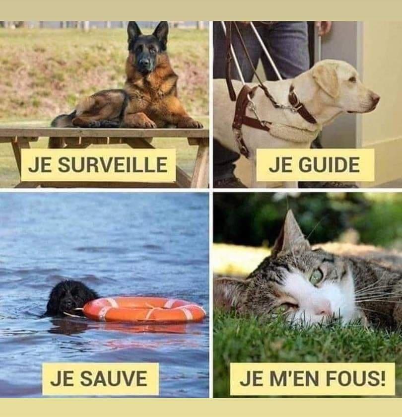 photo humour image drôle service rendu chien/chat