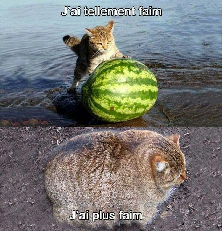 dessin humour chats pastèque image drôle
