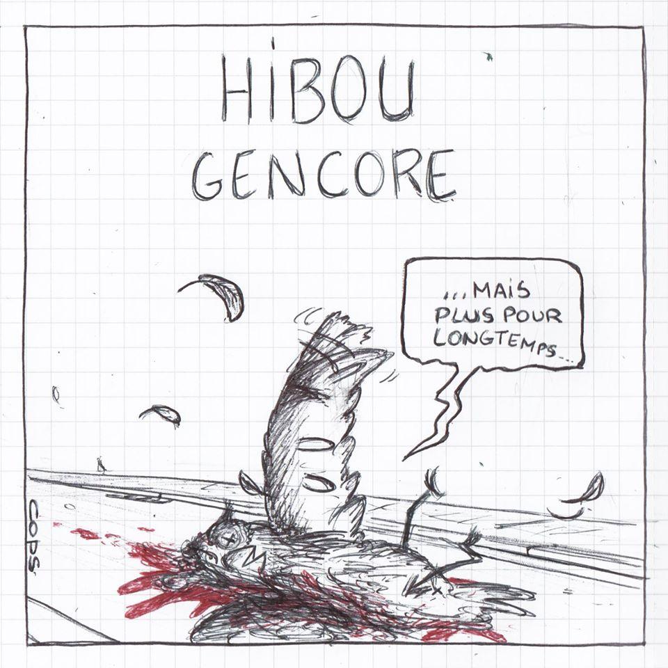 gag image drôle hibou dessin blague humour accident accident oiseau écrasé