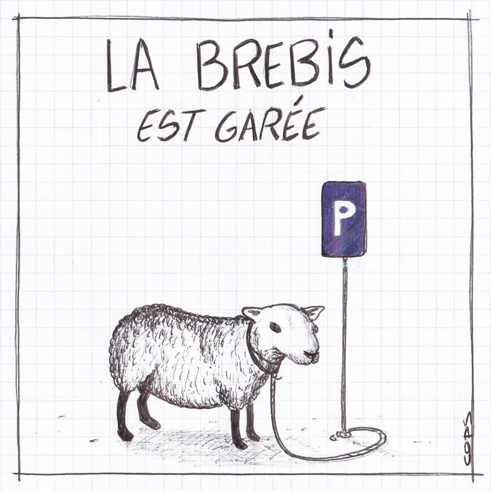 gag image drôle brebis dessin blague humour brebis égarée parking