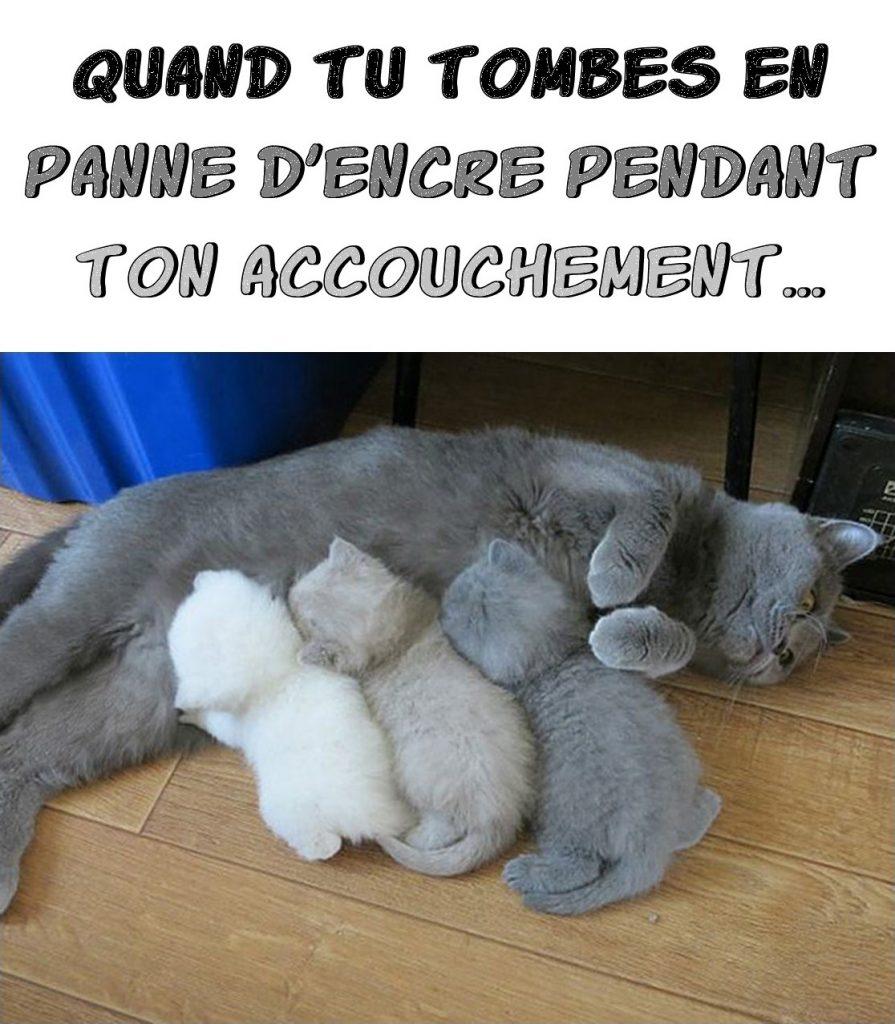 dessin humour chats imprimante image drôle panne d'encre bébés chats